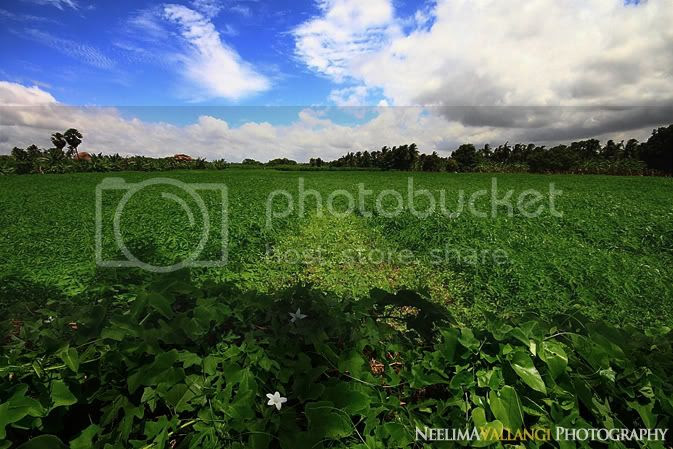 Flower in the fields