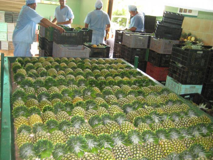 0520-empresa-ceballos-piña.jpg
