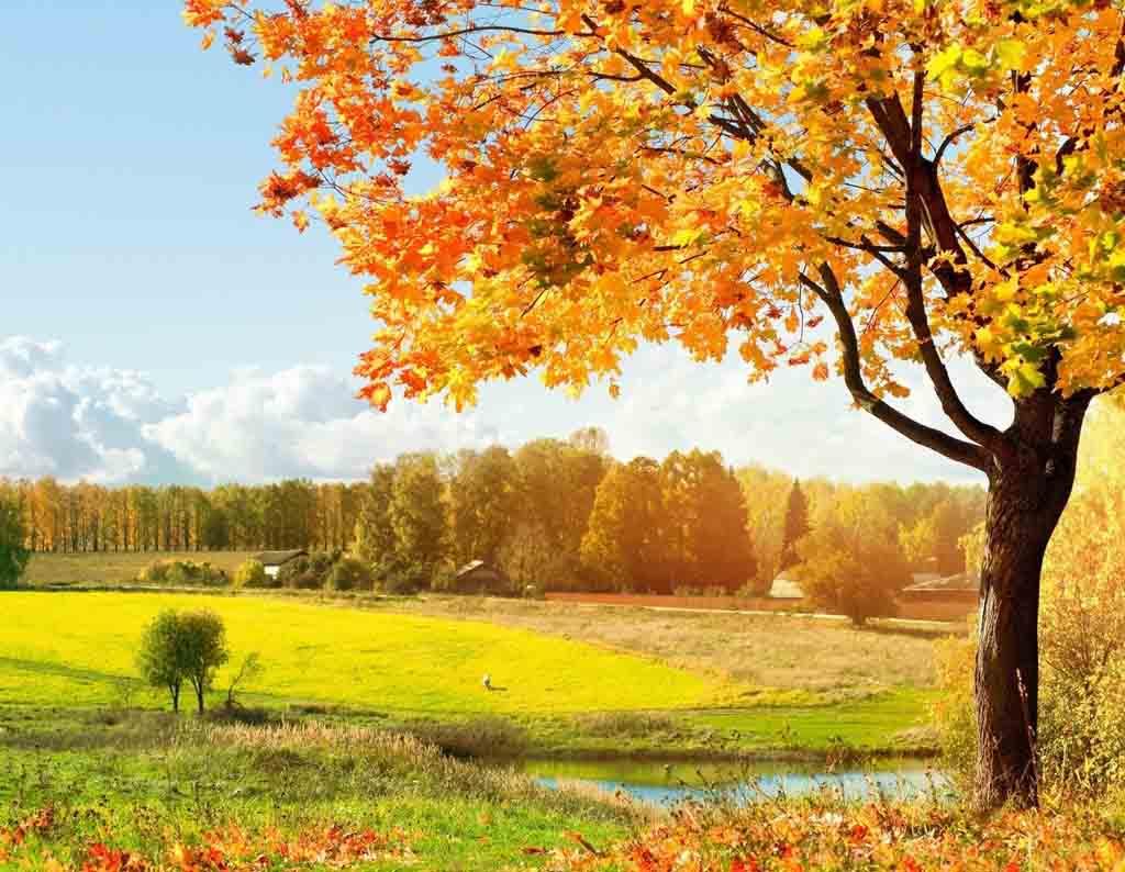 スマホの待ち受け画面やpcの壁紙に使える秋の無料画像 Naver まとめ