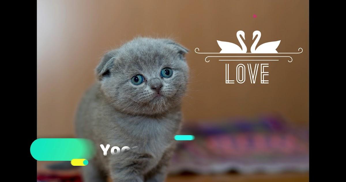 Nama Kucing Ff Yang Bagus 81021 Nama Untuk Kucing Comel Lucu Dan Unik