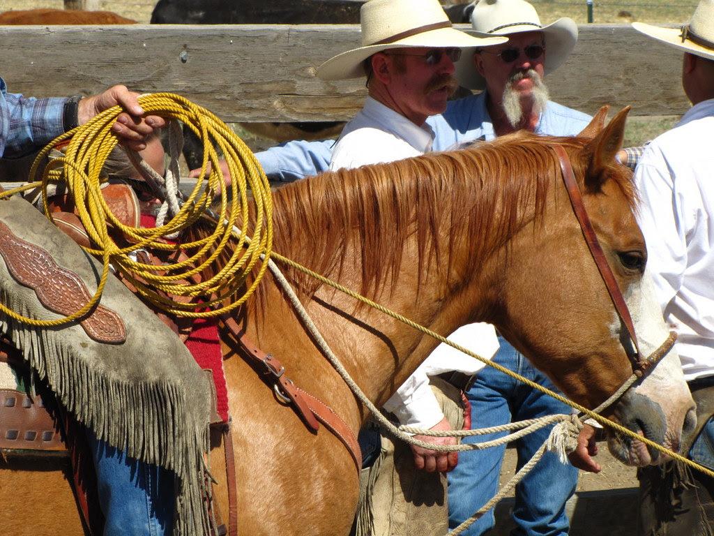Ranch Horse