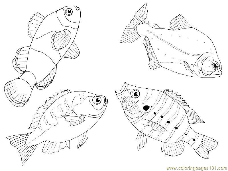 Coloring Pages 4 fishes different views (Animals > Fishes ...