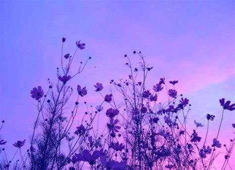 purple aesthetics wiki anime amino