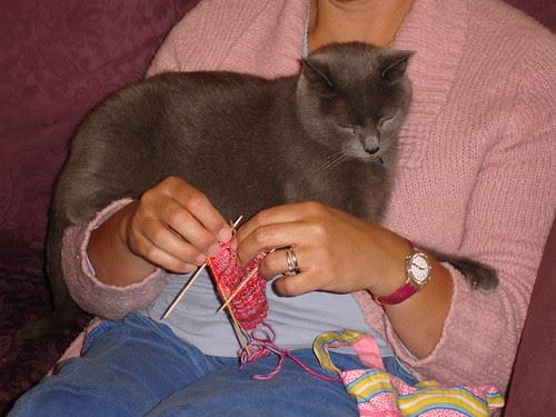 henrycat helps knit 004