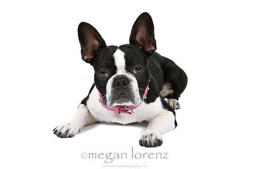 Froston? by Megan Lorenz