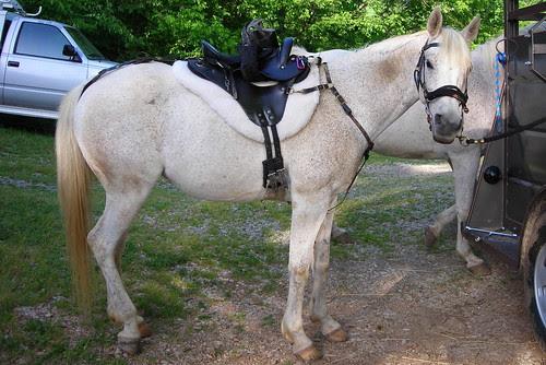 Specialized Saddle