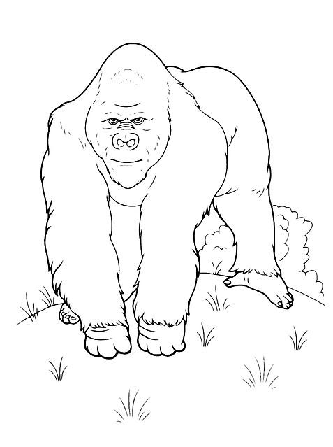 Disegni Da Colorare Per Bambini Scimmia Orango Tango Gif Animate