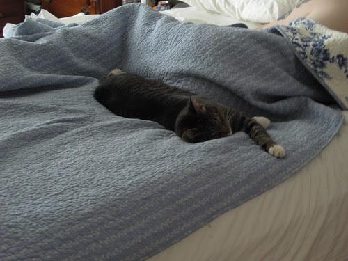 Murderface sleeping