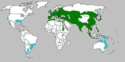Sus scrofa range map.jpg