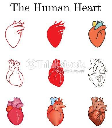 Diferentes Ilustraciones Para El Corazón Humano Imágenes Sencillas
