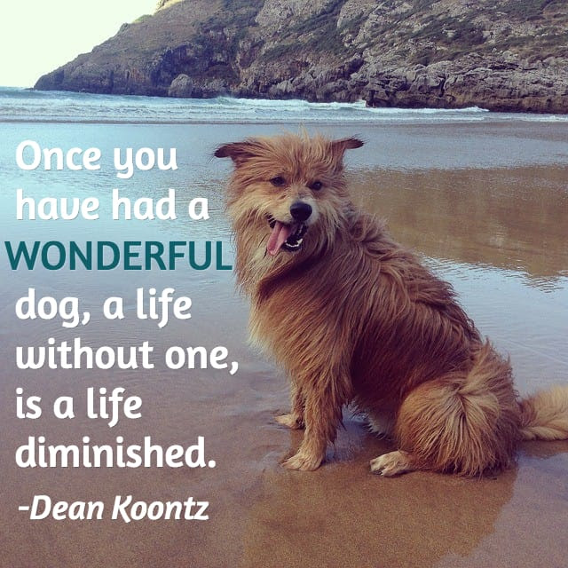 Pet Loss Quotes Dogs. QuotesGram