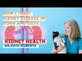 Natural Remedies For Dog Kidney Failure