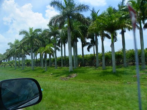 6.21.2009 Miami Beach - Key West, Florida (8)