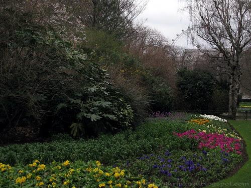 Flowers at St James's Park