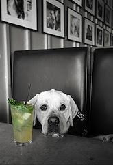 pet friendly restaurants in new orleans
