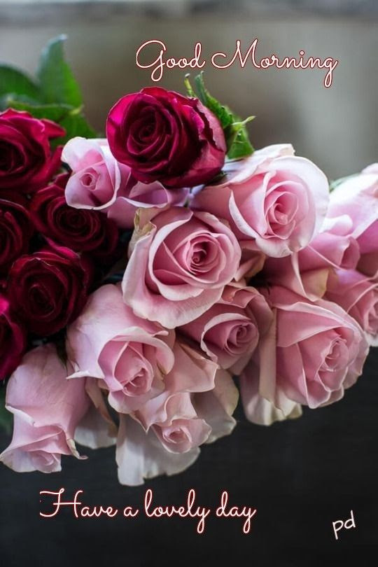Pink Red Rose For Good Morning Pictures Photos And Images For