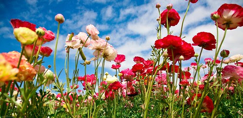 """""""Earth laughs in flowers.""""  Ralph Waldo Emerson"""