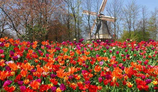 TravelPass.gr - Keukenhof: Ο μεγαλύτερος κήπος λουλουδιών στον κόσμο!