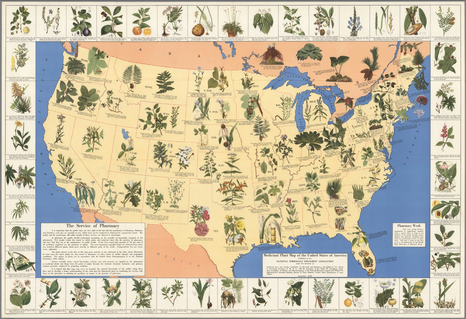 1930's Pharmacist Map of Herbal Cures