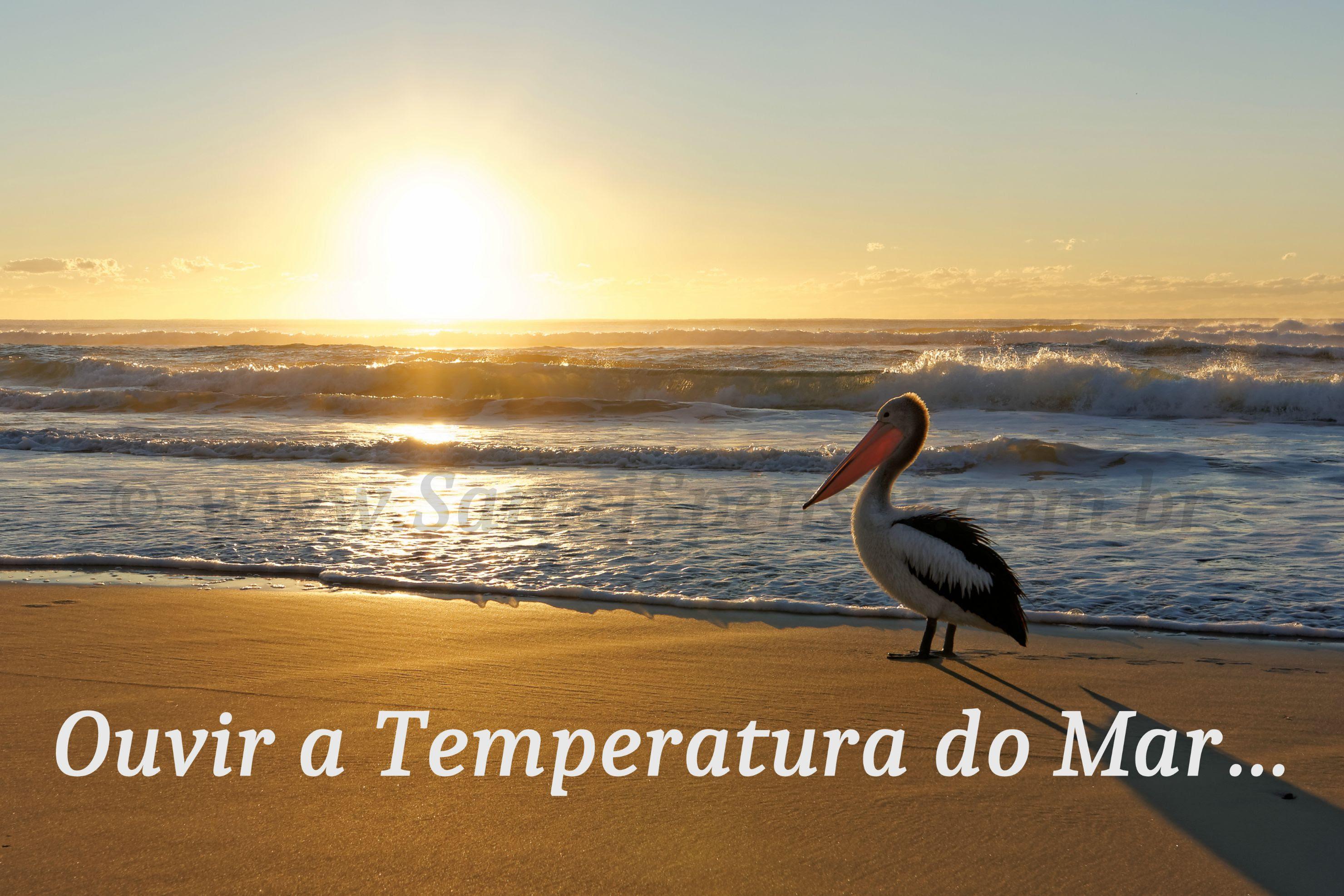 """FOTO: Um pelicano australiano na praia, durante o por do sol, com a legenda: """"Ouvir a temperatura do mar…"""""""