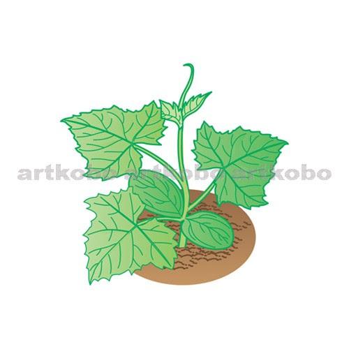 Web教材イラスト図版工房 植物の発芽と養分