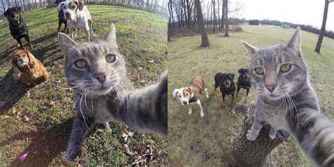 aksi hewan selfie  menggemaskan harusbacacom