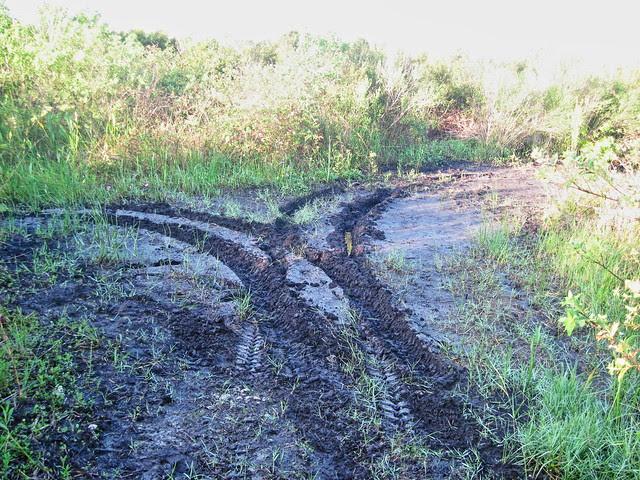 ORV tracks in wetlands 20131013