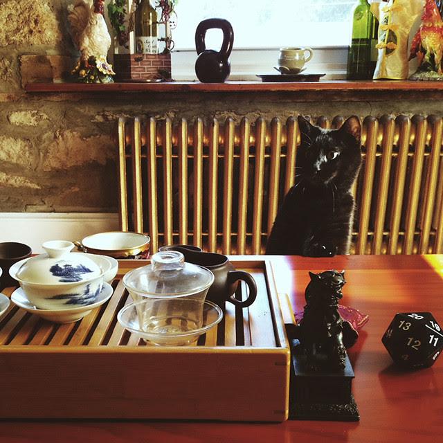 kitty tea time.