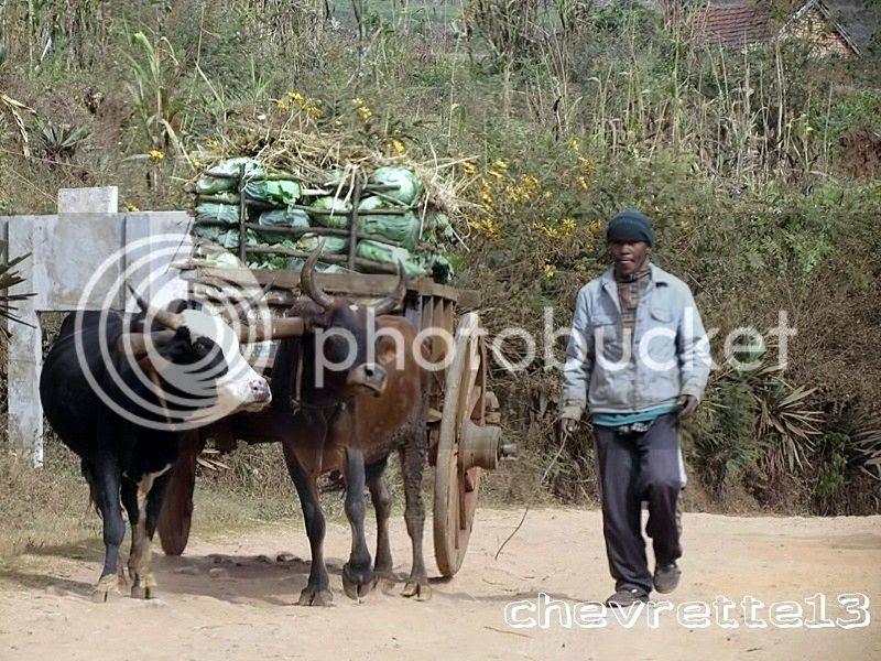 http://i1252.photobucket.com/albums/hh578/chevrette13/Madagascar/IMG_1453Copier_zps6efa0e7f.jpg