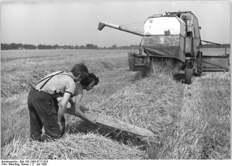 Bundesarchiv Bild 183-1985-0717-024, LPG Simmersdorf , Ernte, Verlustprüfung
