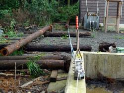 ウインチで杉を引っ張る