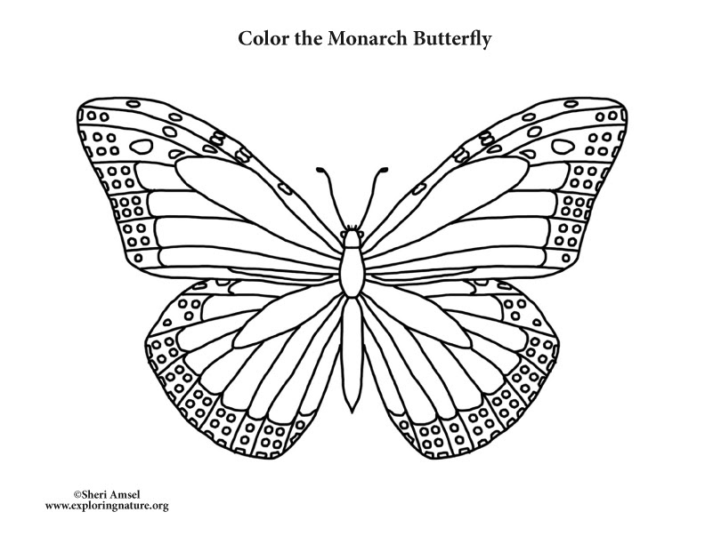 Butterfly (Monarch) Coloring Page