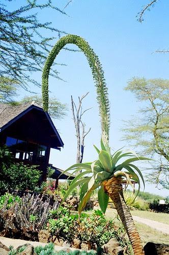 Amboseli Lodge
