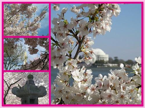 Cherry Blossom '06 mosaic