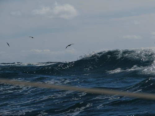 storm birds and wave
