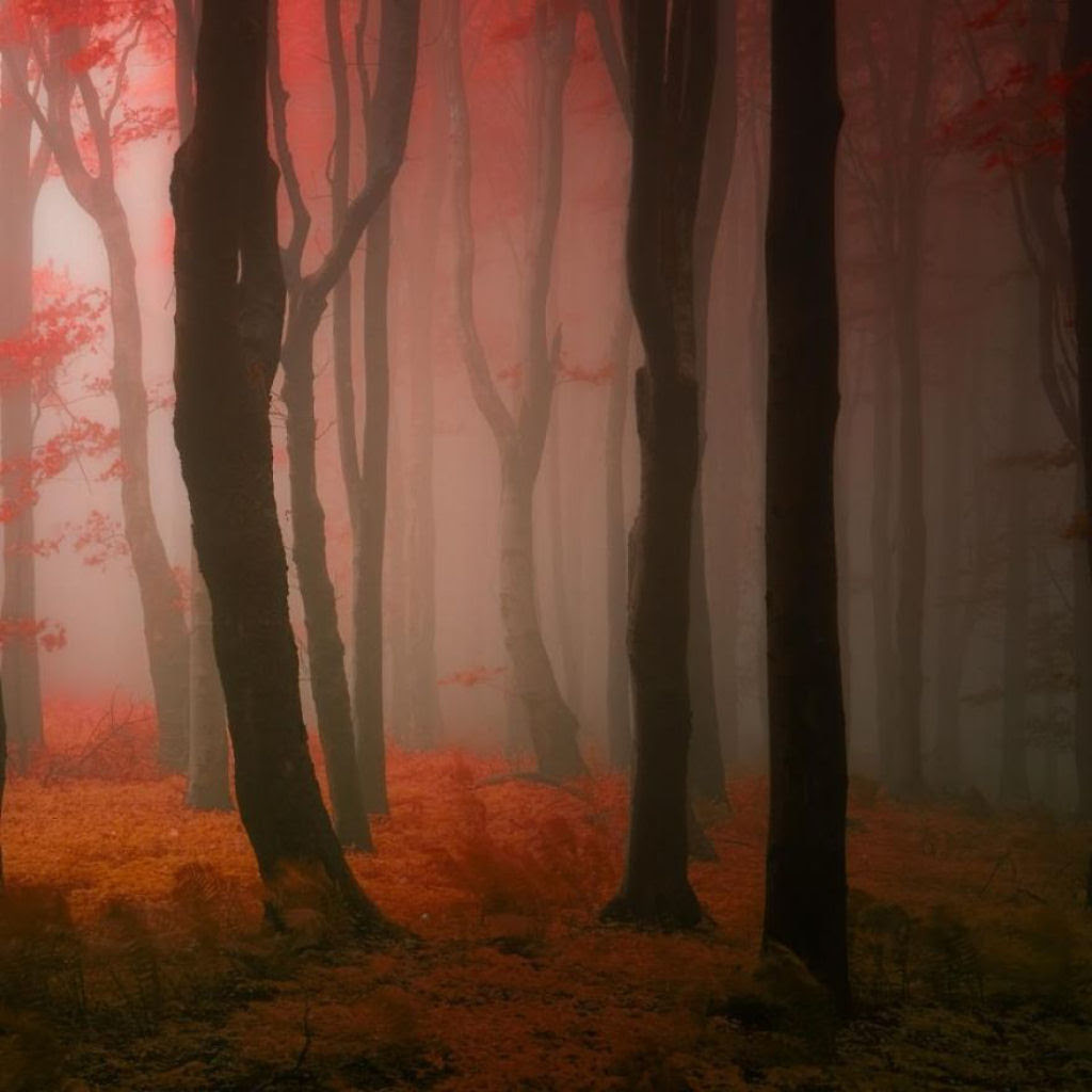 Os bosques outonais oníricos de um fotógrafo tcheco 05