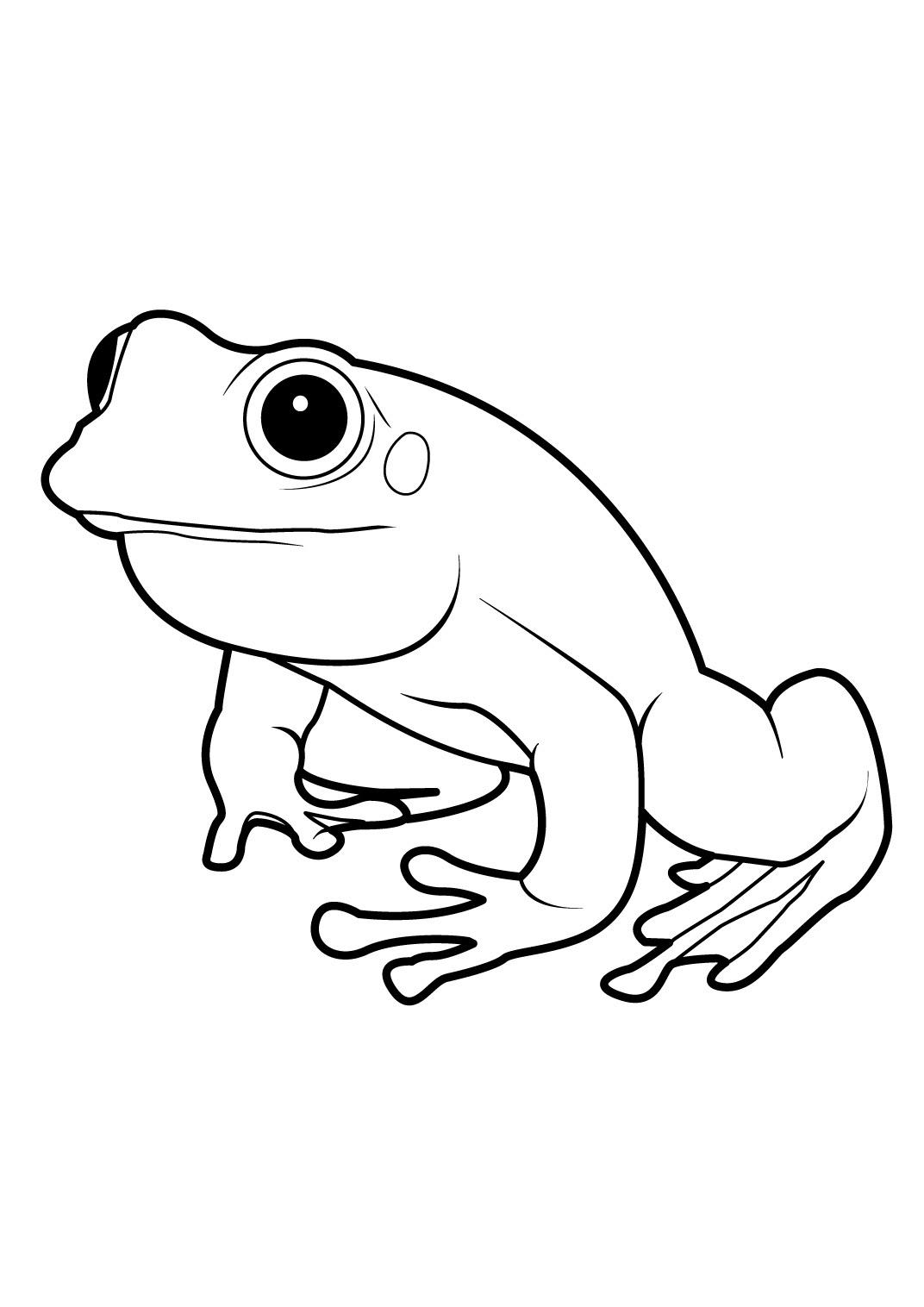 Coloriage grenouille  imprimer dessin de grenouille