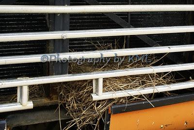 bird nest in a truck grill