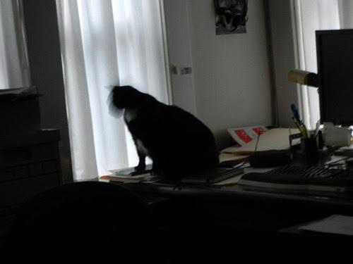 Cat Won _ 4541_500
