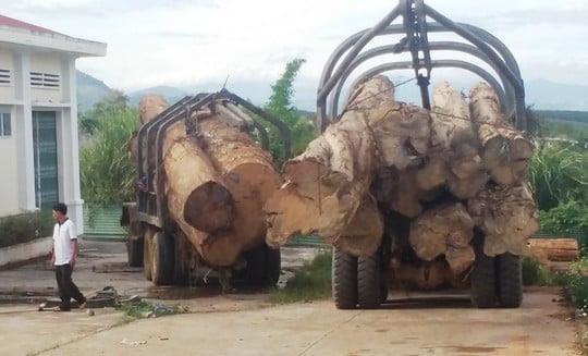 Hình ảnh Bắt vụ vận chuyển gỗ lậu lớn nhất từ trước tới nay số 1