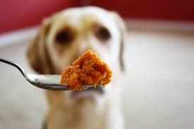 What Is A Good Substitute For Pumpkin In Dog Food