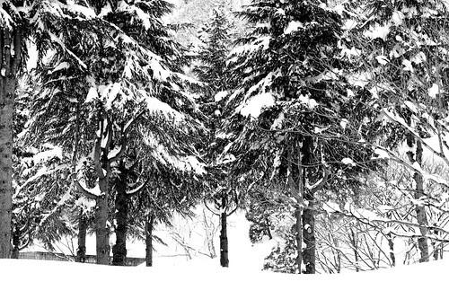 雪は白、木は黒