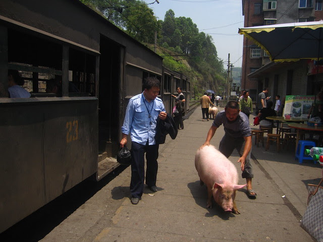 Taking the pigs off the train