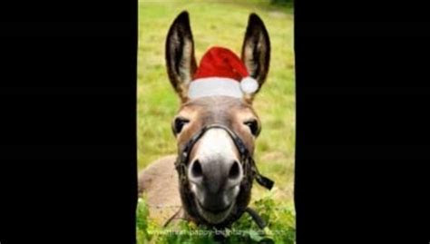 Donkey?s Funny Christmas Song. Free Social Greetings