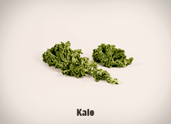 5633-Kale-cropped-full-res copy