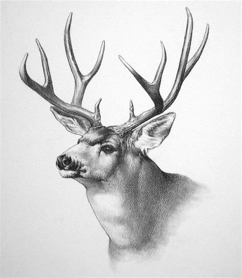 wildlife art  ken oliver  coroflotcom