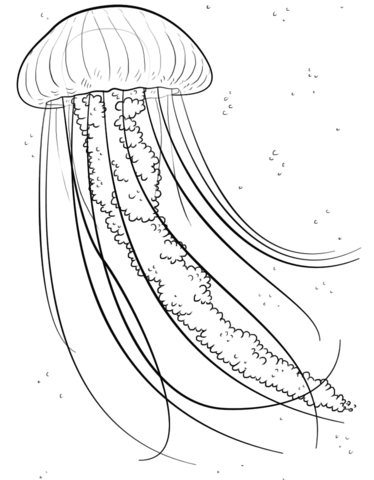 Jelly fish coloring page  Free Printable Coloring Pages