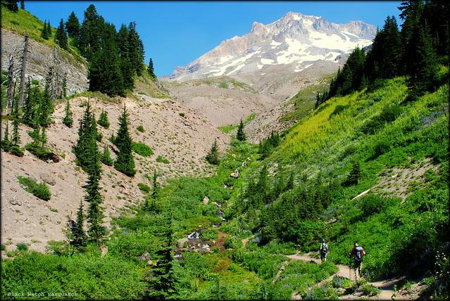 Paradise Park - Mt. Hood
