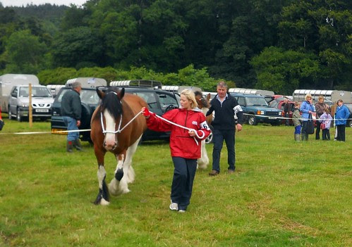 Horse at Castlewellan Show