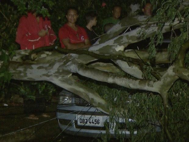 Chuva derruba árvores e causa queda de energia em Jacareí, SP (Foto: Reprodução/TV Vanguarda)